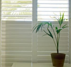 Window shutters with small palm tree plant in front, AHutters & Blinds of Arizona, Phoenix AZ